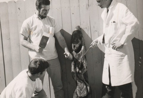 ogle1963